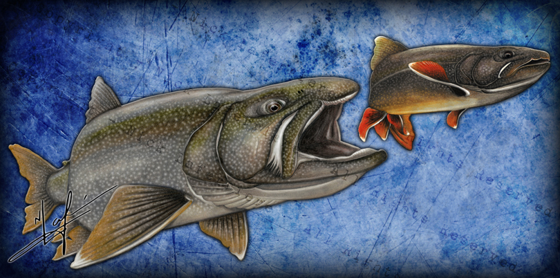 "A giant ""blue"" chasing its favorite snack, a ""butterfly"" morph lake trout. Mixed media - watercolour pencils and digital editing Original Artwork by Nick Laferriere"