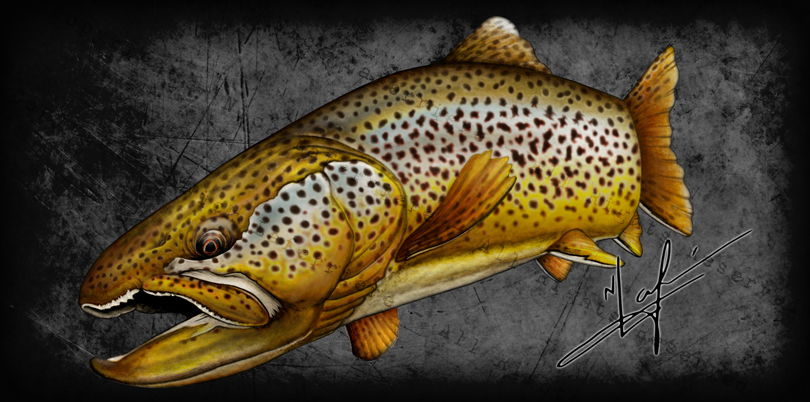 For any fly fisherman, a heavily spotted brown is the ultimate small stream reward. It's amazing that a fish with such a mosaic of spotting and exaggerated colour could disappear in their home waters, and yet, they do all the time. Mixed Media - watercolour pencils and digital editing Original artwork by Nick Laferriere