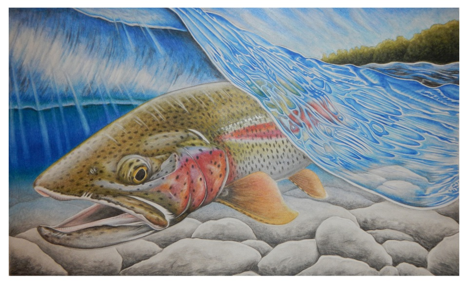 Rainbow Trout Stamp Entry - Nick Laferriere