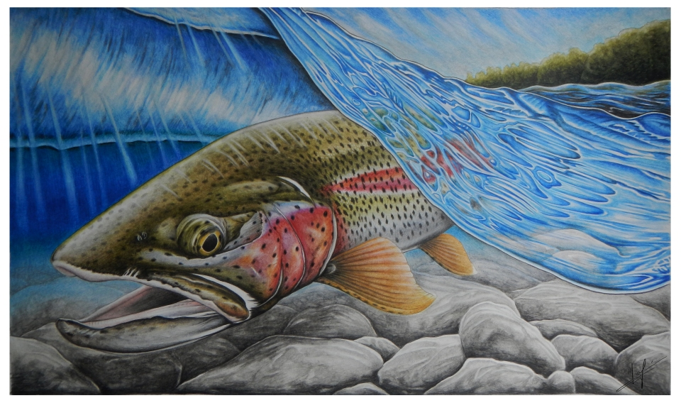 Rainbow Trout Stamp - Nick Laferriere