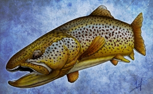 Brown Trout Nick Laferriere