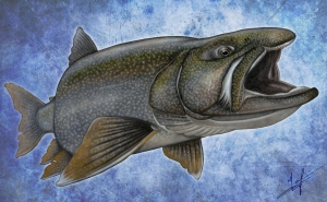 Lake Trout Nick Laferriere