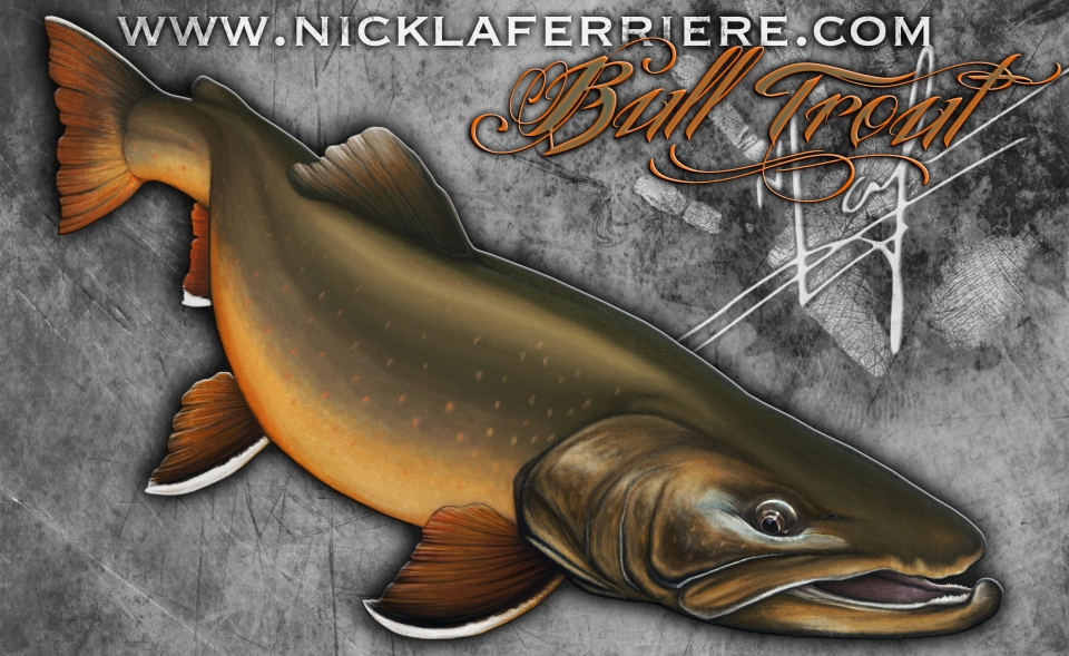 Bull Trout Nick Laferriere