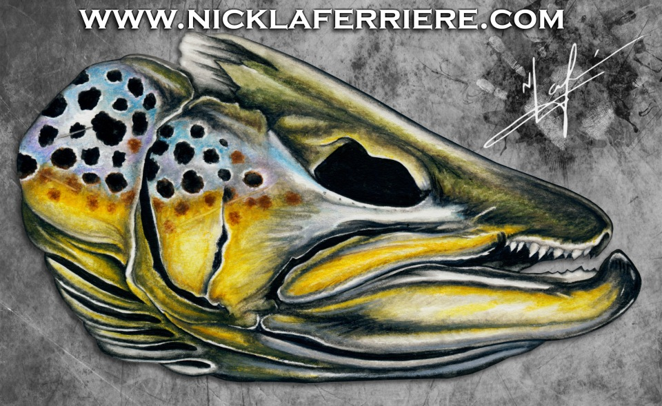 Brown Trout Skull Nick Laferriere