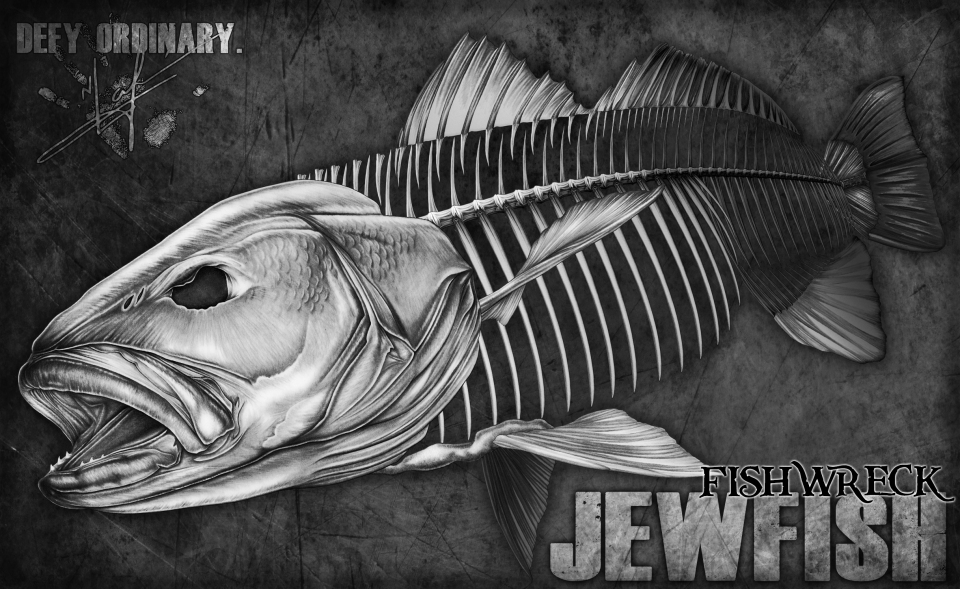 Jewfish Mulloway Skeleton