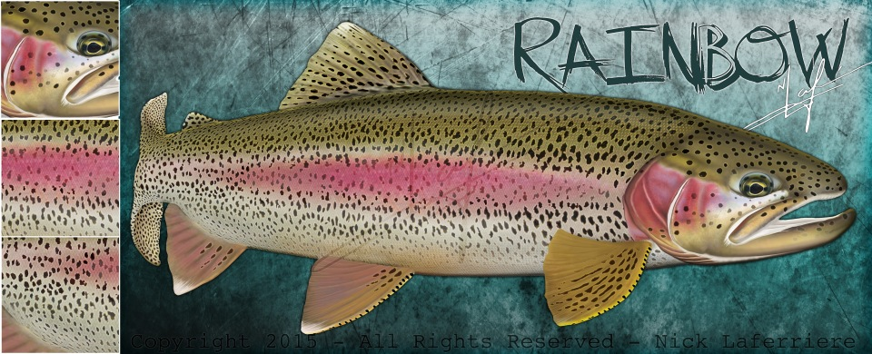 rainbow trout promo smaller