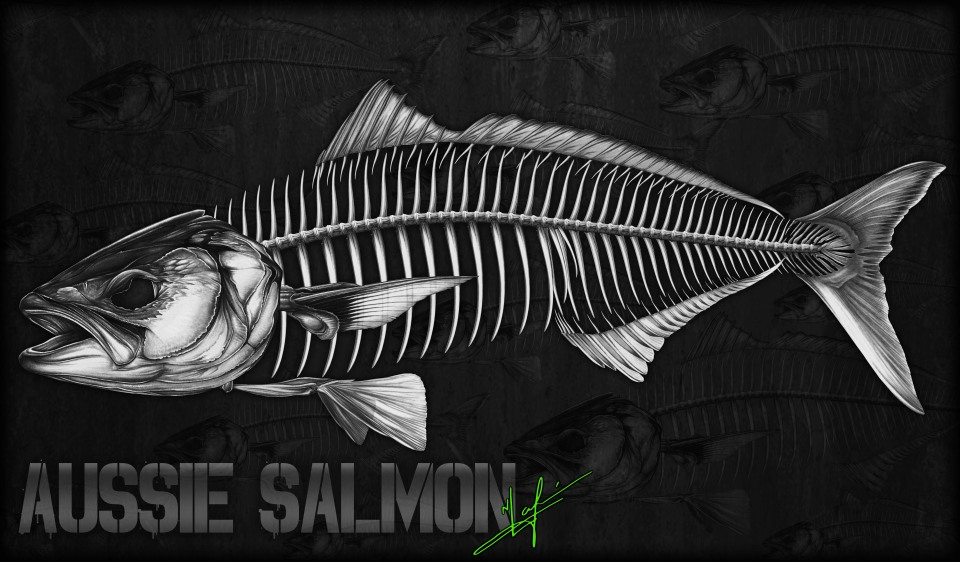 australian salmon skeleton