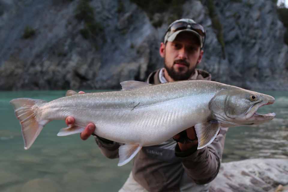 columbia river bull trout