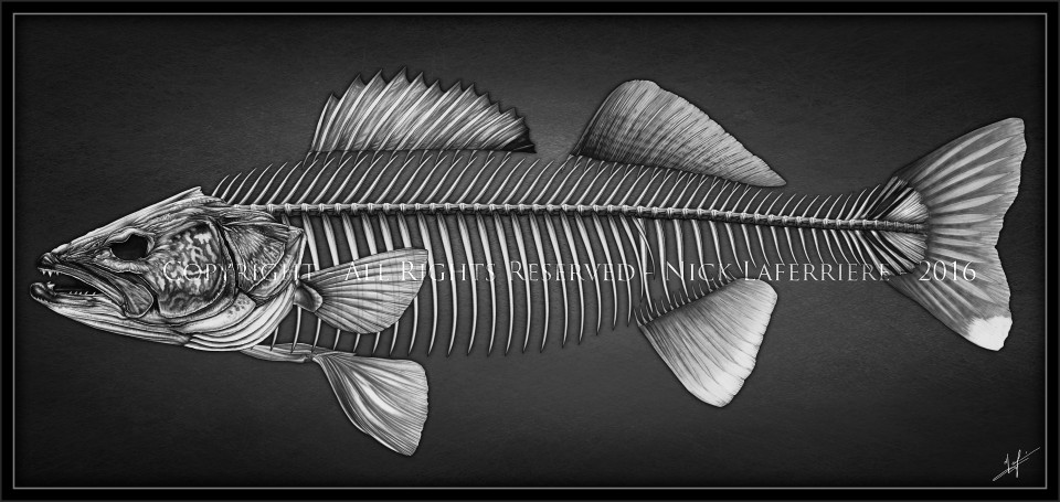Walleye Skeleton print copyright