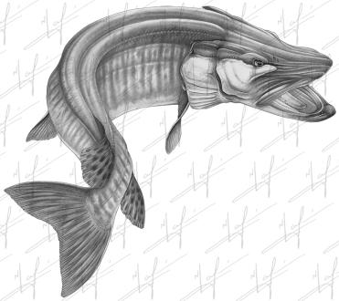 new muskie sketch 300dpi